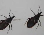 Cứu sống nam bệnh nhân sốc phản vệ do côn trùng cắn