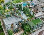 Tận dụng mái nhà bỏ hoang, người phụ nữ 45 tuổi đã biến toàn bộ không gian thành 'khu vườn địa đàng'