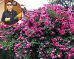 Khu vườn hoa hồng với đủ loại từ nội đến ngoại rộng 100m² ở Quảng Ninh