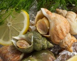 Ốc Bulot Pháp: Từng chả ai ăn, dùng làm mồi cho cá đến chỗ trở thành thực phẩm đắt cả nửa triệu bạc vẫn 'hết hàng'