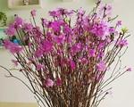 Chị em rần rần mua hoa đỗ quyên ngủ đông về chơi Tết vì quá đẹp mà không hề hay biết nó có thể gây ngộ độc