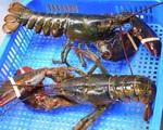 Hải sản ngoại giảm giá khủng vì virus corona, dân 'nghiện' đồ biển sung sướng mua về ăn