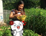 Phạm Thanh Thảo làm vườn bên Mỹ, trái nào trái nấy đều 'ngoại cỡ'