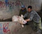 """Bộ Nông nghiệp nói gì về chuyện thịt lợn trong nước không chịu xuống giá, """"bất chấp"""" chỉ đạo của Chính phủ"""