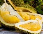 7 sự thật 'khó đỡ' về trái sầu riêng sẽ khiến người mua vô cùng bất ngờ