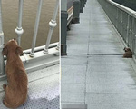 Xót xa: Chó đợi trên cầu 4 ngày sau khi chứng kiến chủ tự tử