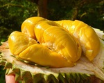 Loại sầu riêng giá 1,6 triệu đồng/kg đang 'hút khách' rần rần là loại sầu riêng gì?