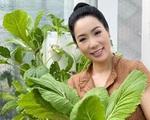 Vườn rau ăn không xuể trong biệt thự 200m2 của Á hậu Trịnh Kim Chi, ngạc nhiên nhất là chi phí đầu tư chỉ... 3 triệu đồng