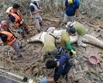Mổ bụng cá sấu lấy thi thể thiếu niên 14
