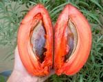 Những loại quả ruột đỏ 'gây sốt' nhất hiện nay