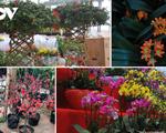 Những cây cảnh lạ mắt đang 'khuynh đảo' thị trường Tết năm nay