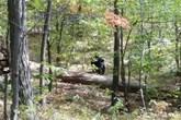 Bị gấu đen cắn xé tới chết vì cố gắng chụp ảnh