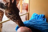 Tình yêu thương cảm động giữa loài vật và con người