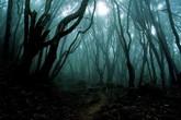 Rùng rợn khu rừng nghìn người tự sát ở Nhật Bản