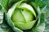 Những người tuyệt đối không được ăn rau bắp cải