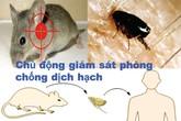 35 loại bệnh nguy hiểm đến từ chuột