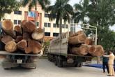 Bắt giữ 2 xe chở gỗ táu khủng