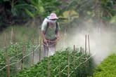 Cảnh báo nguy cơ độc hại từ hóa chất bảo vệ thực vật