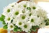 Cách chọn bình và cắm hoa cúc phù hợp với từng không gian sống