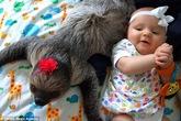 Bộ ảnh cực đáng yêu bé 5 tháng tuổi bên chú lười tinh nghịch