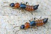 Không nên giết kiến để nọc độc lan rộng