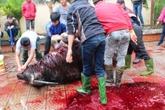 254 người ngộ độc vì ăn thịt trâu
