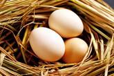 Cách đơn giản để biết trứng mới đẻ hay để lâu