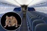 Chuột gây náo loạn, máy bay phải hoãn 6 tiếng