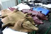 Bên trong trang trại nuôi cá sấu làm đồ da lớn nhất Sài Gòn