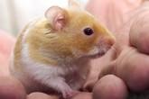 Giáo viên nhai sống chuột trước mặt học sinh