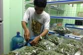 Sấu non 40.000 đồng/kg hấp dẫn khách Sài Gòn