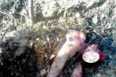 Kinh sợ người phụ nữ bị gấu tấn công, chôn sống
