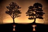 Nguyên nhân thất bại của rất nhiều người: Hai cái cây, bạn sẽ chặt cây nào?