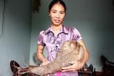 Vì sao củ khoai khổng lồ ở Nghệ An có hình bàn tay?