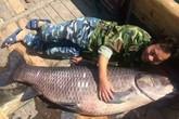 Ngư dân câu được cá trắm đen khổng lồ dài gần 2m
