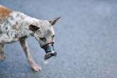 Gia đình của bé và cuộc giải cứu chú chó bị buộc mõm