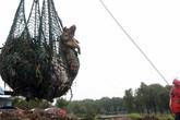 Kinh sợ nạn buôn bán thịt lợn chết