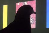 Chim bồ câu chẩn đoán ung thư không kém gì bác sĩ