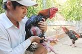 Anh chàng cử nhân xây dựng thu tiền trăm triệu từ việc nuôi gà hiếm, chim quý