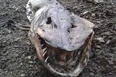 Phát hiện xác thủy quái kinh dị dạt vào bờ hồ