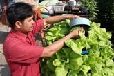 Trồng rau bằng đất sét, nuôi cá trên sân thượng ở Sài Gòn