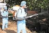 Hạn chế tối đa các trường hợp tử vong do sốt xuất huyết