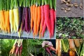 Trồng cà rốt bảy màu: Mẹ và bé đều mê!