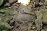 Chồng say rượu rơi xuống hố bị công nhân làm đường chôn sống