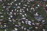 Kinh hoàng 16.000 con lợn chết trôi lềnh phềnh trên mặt nước