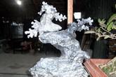 Chơi bonsai đá giá hàng chục triệu đồng