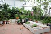 Chủ vườn 70m2 nhàn rỗi nhờ hệ thống tưới 100 nghìn đồng