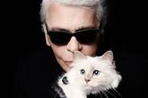 Mèo Choupette của giám đốc sáng tạo Chanel kiếm tiền giỏi như siêu mẫu