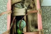 Bức ảnh chú chó nằm trong chiếc giỏ của cậu bé đánh giày gây xúc động