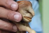 Chó hình đầu voi ngâm rượu 17 năm vẫn còn nguyên